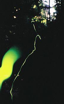 2005hotaru1