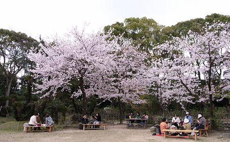 2007_sakura_s02