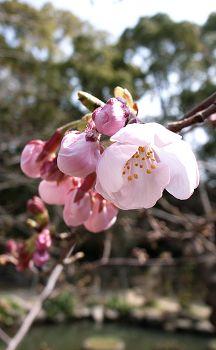 2007_syukeien1