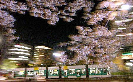 20080408_shirakami