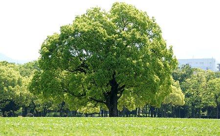 20090506_tree01