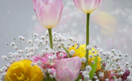 20100306_flower01
