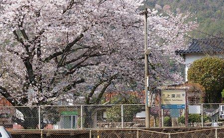 20090405_kamifukawa02